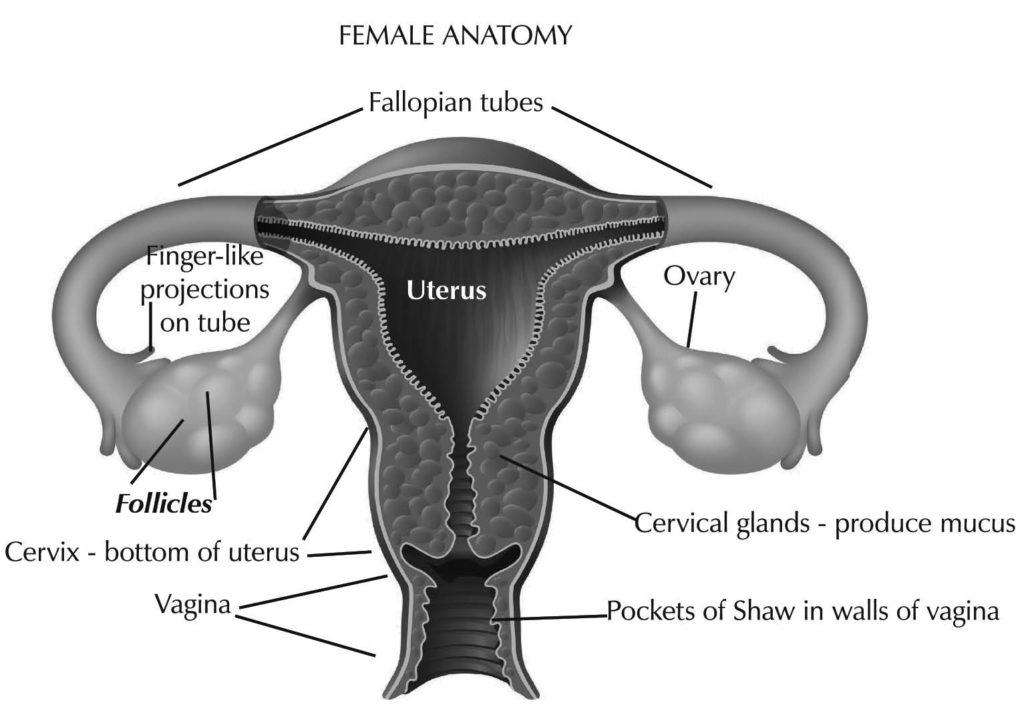 Spring2016-fertility-fig1